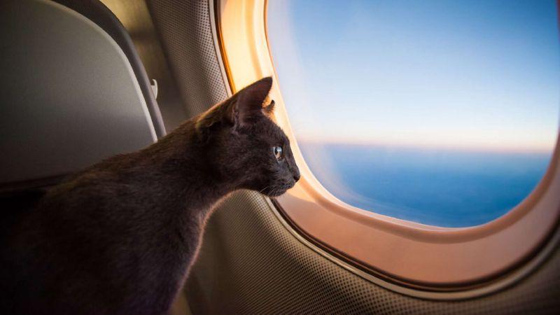 перевозка кошки в самолете по России