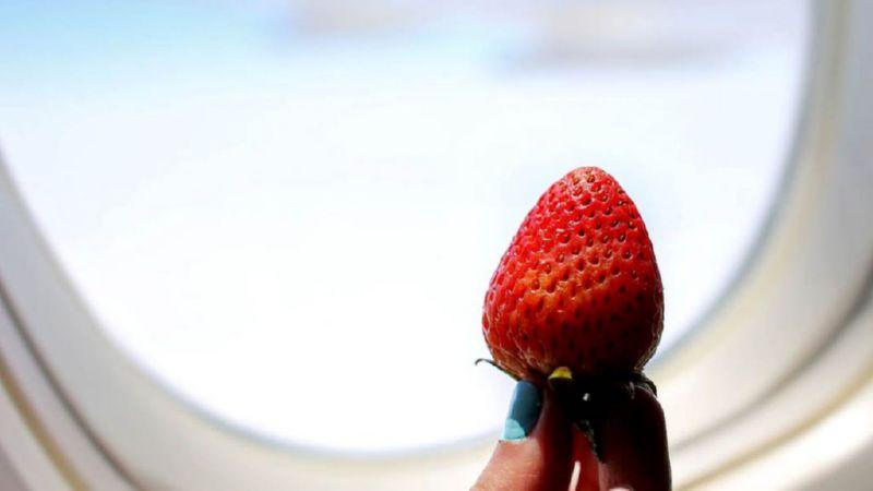 можно ли провозить фрукты в ручной клади в самолете