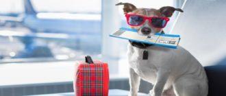билет для собаки на самолет